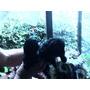 2 Cachorritos Negros Poodlestoy