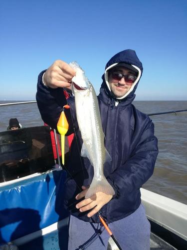 pesca embarcada en el rio de la plata de bagre de mar