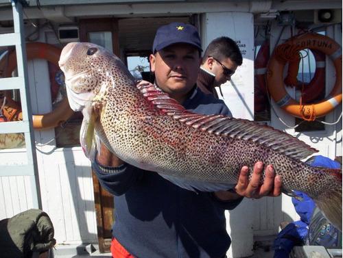 pesca embarcado en mar del plata en yate fortuna ii