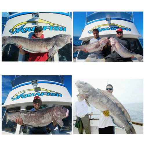 pesca embarcado en mar del plata, salmones, pez limon