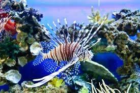 Pez escorpion acuario marino para pecera 1 en for Acuario marino precio