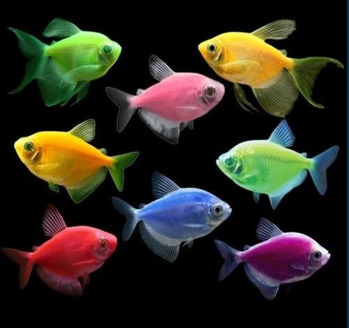 pez monjita colores surtidos