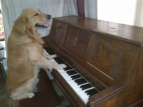 pianos: afinación restauración y venta de todos los modelos.