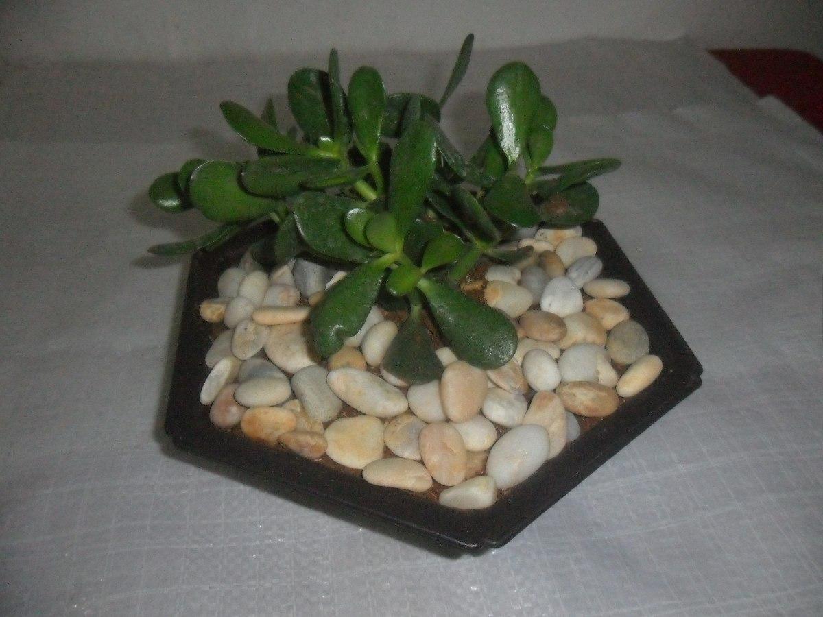 piedras blancas decorativas para jardines bs 260 00 en