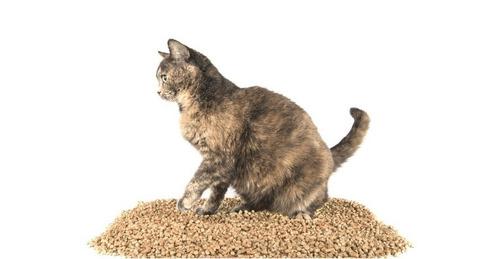 piedras pellet madera sustrato roedores gatos 5 litros