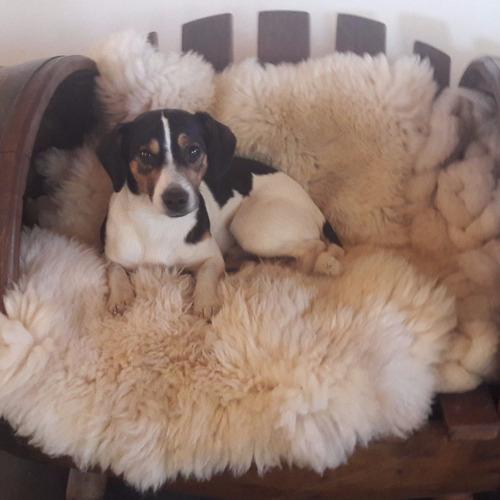 pieles de oveja y cordero; bebés, motos, sillas, cunas, cama