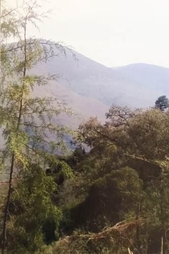 pinal de amoles (rancho alcala)