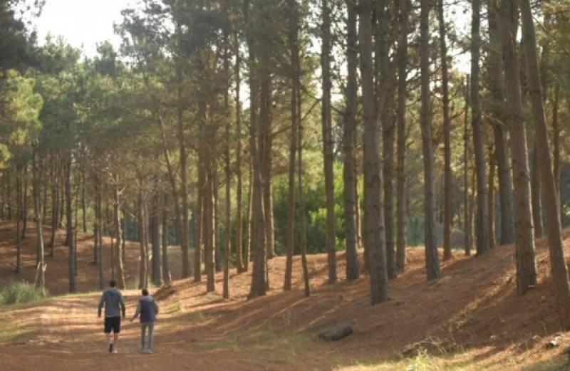 pinar en venta en el area senderos de costa esmeralda
