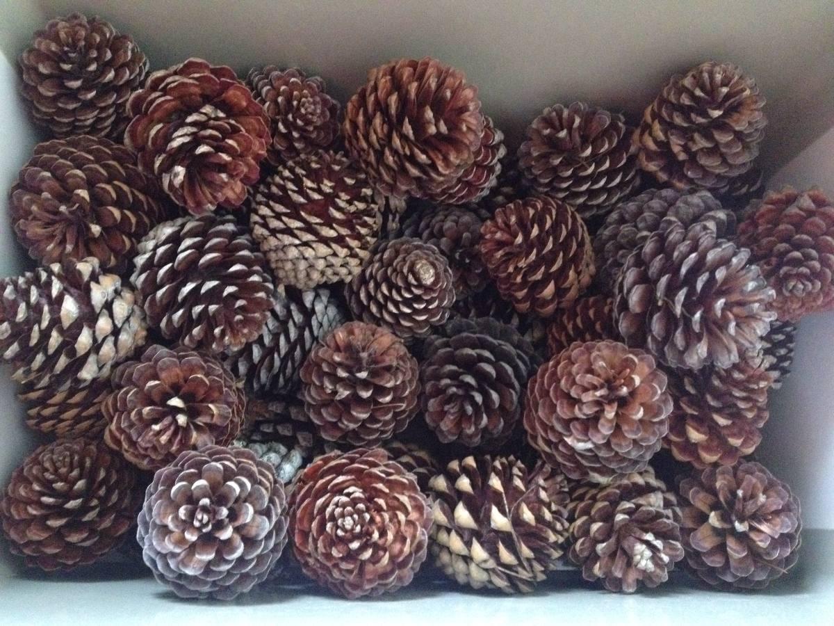 Pi as de pino natural decoraci n arreglos navidad - Pinas de pino para decorar ...
