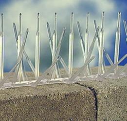 pinchos pinches para ahuyentar palomas de policarbonato