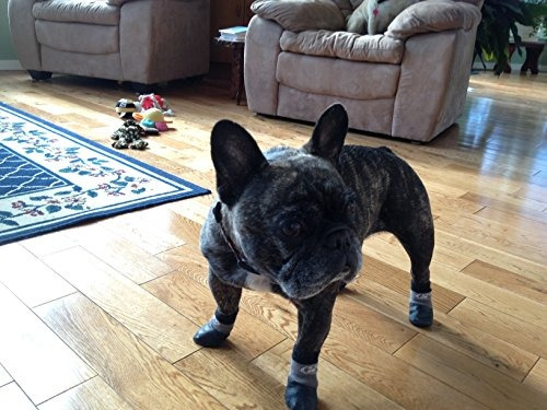 pinzas del resbalón no calcetines del perro (l  libras (ata