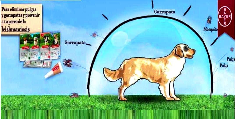 Pipeta advantix perro 25 a 40 kg anti pulga mosquito - Pipeta advantix despues bano ...