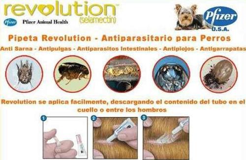 pipeta revolution perros hasta 40 kg anti pulgas garrapatas