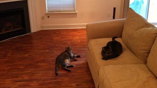 piso laminados