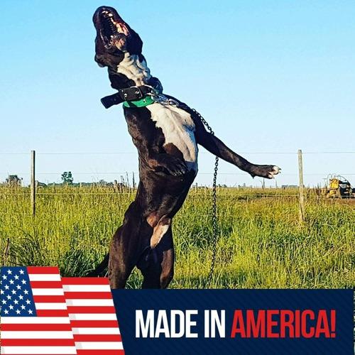 pitbull blue black pr ukc stud free criadero age of meka