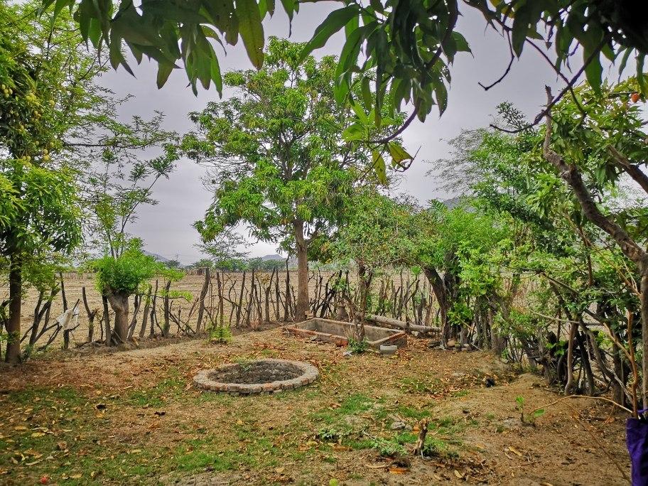 piura morropón -se  vende  3 hectarias agricolas