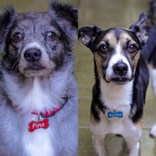 placa de identificação para cachorro plaquinha pingente pet