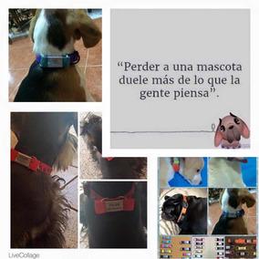a32002c3adba Correas y Collares en Mérida para Perros en Mercado Libre México