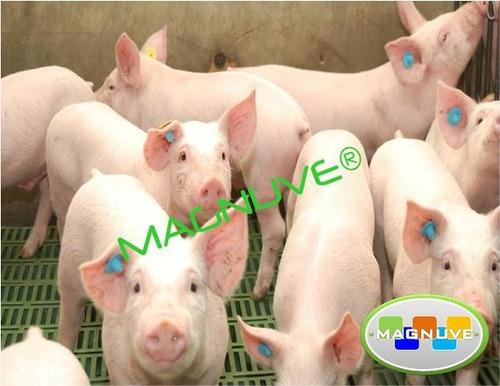 planos galpón granja porcina cerdos medidas espacios control