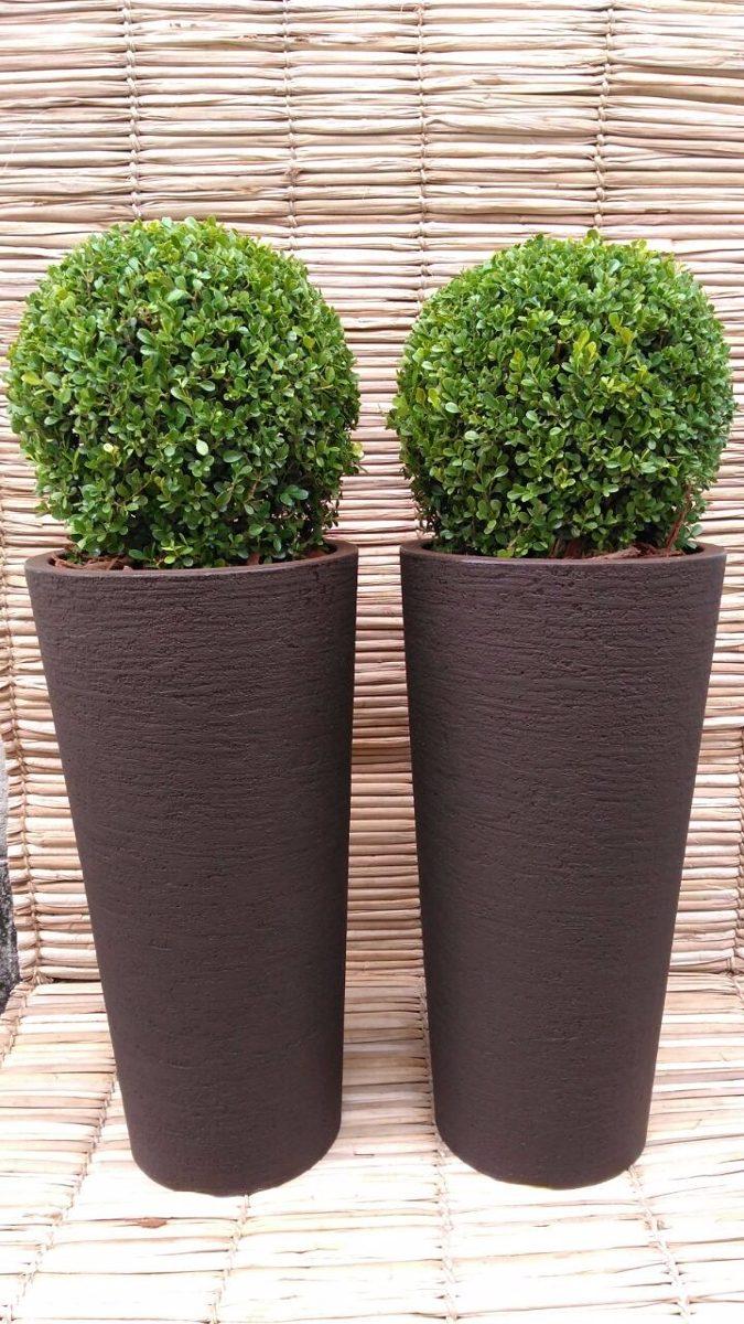 Planta buxinho natural vaso alto 2 unids entrega sp - Plantas para setos altos ...