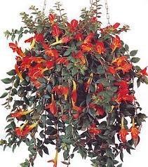 planta con flores