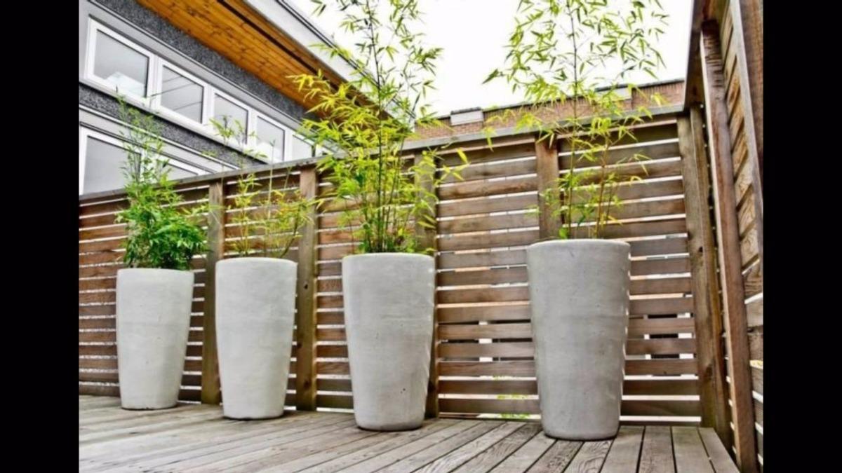 Planta De Ca A Tacuara Bamb 200 00 En Mercado Libre ~ Cañas De Bambu Verdes Para Decorar
