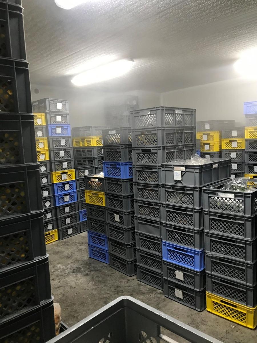 planta de procesamiento de alimentos, 100% operativa