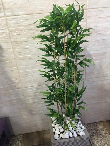planta decoração casa