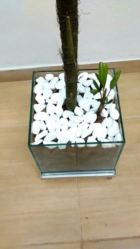 planta natural palmeira ráfis vaso completo rodinhas