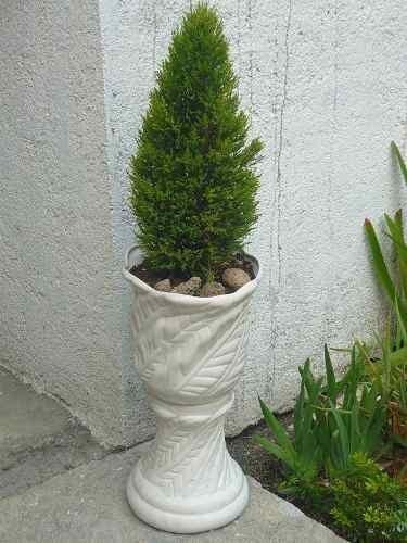 Planta pino cipres ideal cercos vivos casas jardin macetas for Variedades de pinos para jardin