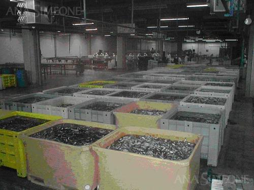 planta procesadora de pescado a la venta con instalaciones completas