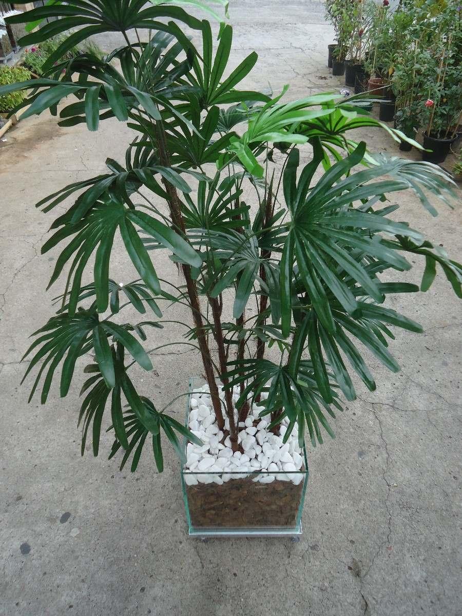 Planta rafia artificial r 480 00 em mercado livre - Planta artificial ...