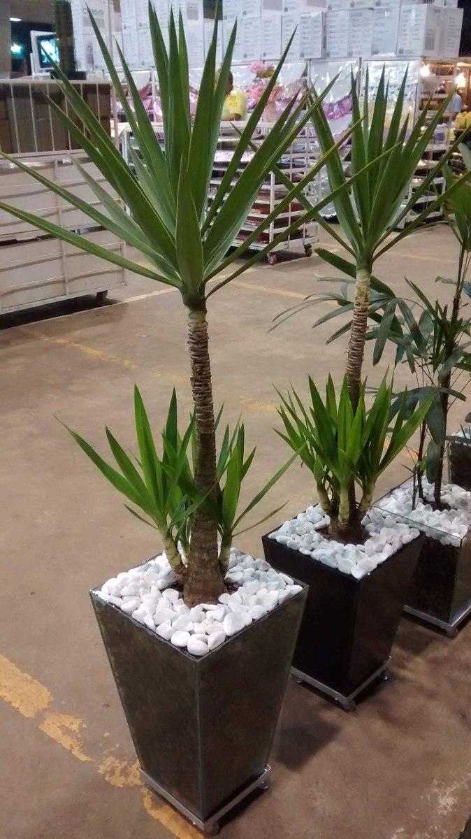 Planta yucca cachepot de vidro trap zio 50x30x20 cm r for Yuca planta de exterior