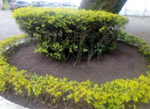 plantação de grama! manutenção de jardim! paisagismo!