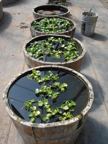 plantas acuáticas flotantes  mix 6 variedades