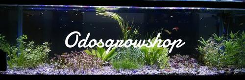 plantas acuaticas. heteranteria dubia