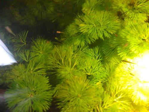 plantas acuaticas  varias  especies