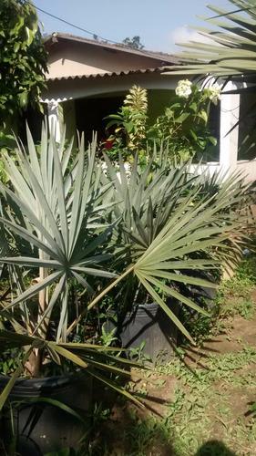 plantas bismarck