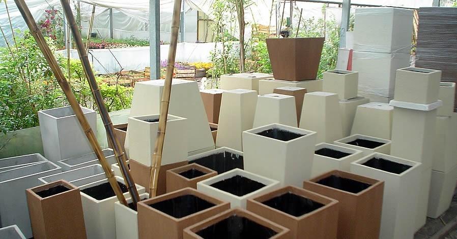 plantas de cañas de bambú y tacuara de cultivo por planta - $ 69
