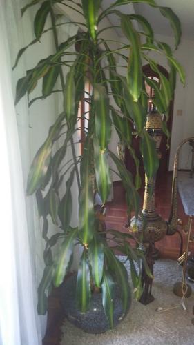 plantas de interior divinas!!!!!
