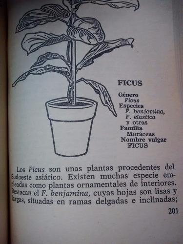 plantas de interior f. soler y j. dedeu editorial bruguera