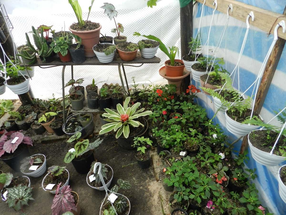 Plantas de interior vivero olga de nuevo berl n r o for Viveros plantas de interior