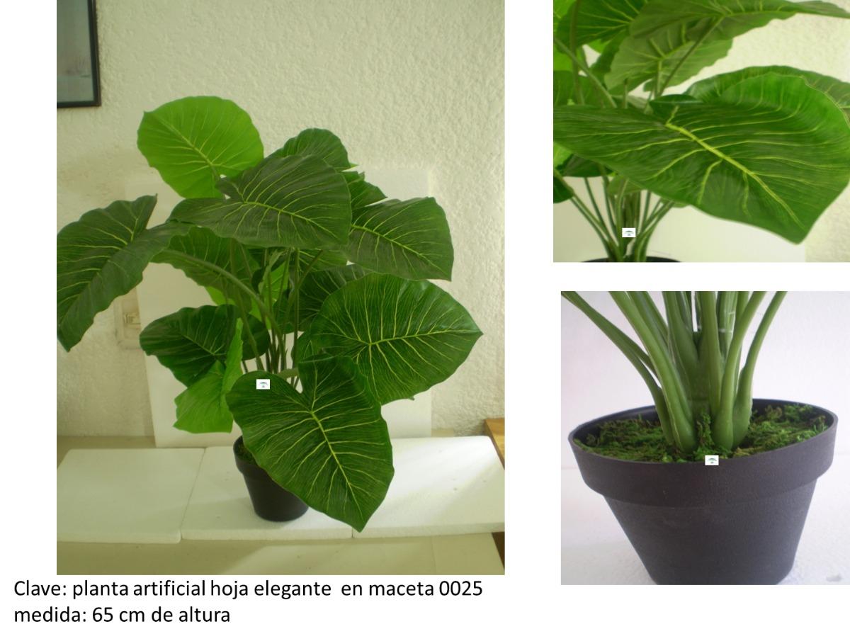 Plantas decorativas para oficinas o negocios mmu 650 for Plantas decorativas