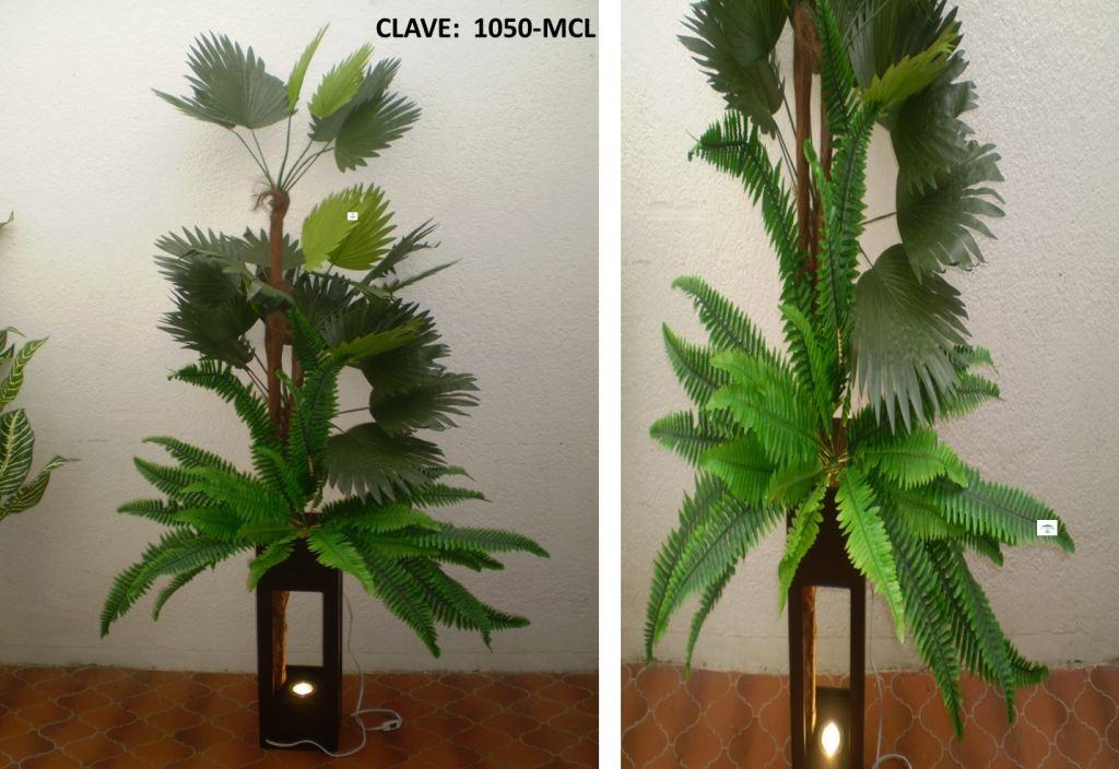 Plantas decorativas sp0 3 en mercado libre for Plantas decorativas