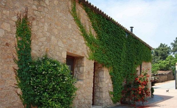 Plantas enredaderas perenne ideal para muros cercos for Plantas trepadoras para muros