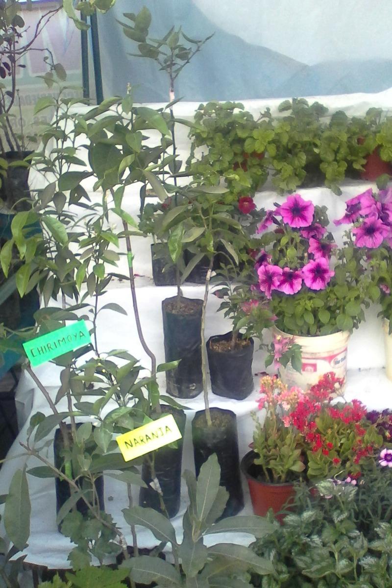 Plantas Exoticas Flores Cantutas Cedron Peras Manzanos Etc D S 1