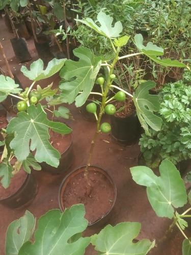 plantas frutíferas e hornamentais e nativas