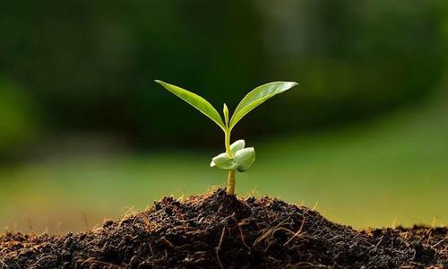 plantas jardín tierra