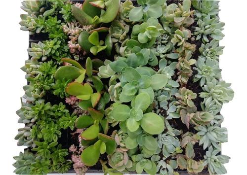 plantas miniatura suculentas  recordatorios
