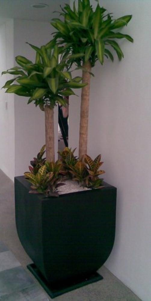 Plantas naturales para interior en maceta solo cdmx 1 en mercado libre - Macetas para plantas de interior ...